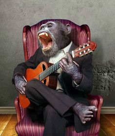 Monkey Musician by funkwood on DeviantArt Funny Animal Pictures, Funny Animals, Cute Animals, Birthday Greetings, Birthday Wishes, Cute Quotes For Life, Happy Birthday Images, Chimpanzee, Happy B Day