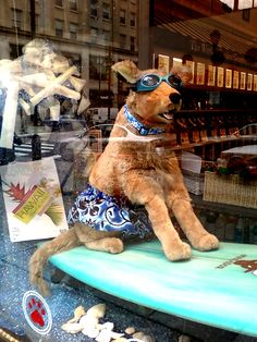 "-Repinned- From the Just Dogs Bakery in Philadelphia - a ""Hang Ten"" dog mannequin that is surfing."