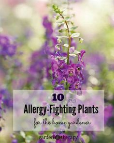 This is amazing! Create a garden that will actually protect allergy and asthma sufferers by trapping pollen and cleaning the air!