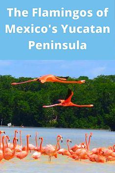 A complete guide to seeing flamingos at Celestun in the Yucatan Peninsula of Mexico. Travel Advice, Travel Guides, Travel Tips, Nature Photography Tips, Ocean Photography, Places Around The World, Around The Worlds, Countries To Visit, Amazon Rainforest