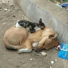 Twitter - This picture makes me so sad & so angry at the same time. I just want to hug them & take them home.