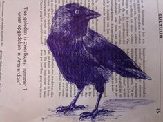 Jackdaw on newspaper - Ellen van Putten