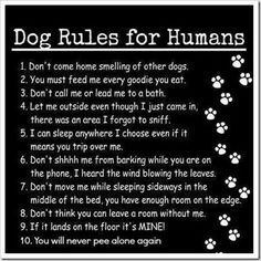 I've failed at (most) of these. No wonder some days Waylon gives me the evil eye (singular).