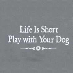 """""""Life is short. Play with your dog."""" I'm sure my pooch would agree! #dog #quote"""