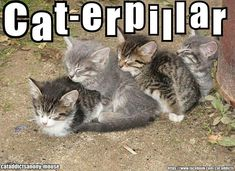 #kittens #animals #humor