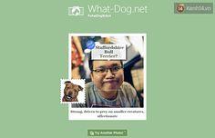 """Cười không nhặt được mồm với ứng dụng """"Bạn là loài chó nào?"""" của Microsoft - Let's Design"""