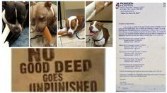 Good Samaritan needs help with 5 dogs rescued from the streets