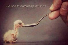 Be kind to everything that lives. #vegan... this includes all people!