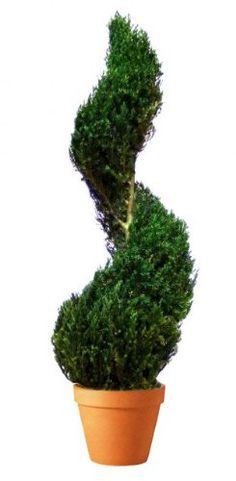 Forever Green Art Preserved Classic Spiral Juniper Topiary with Terra Cotta Pot, 30-Inch >>> See this great product.