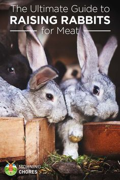 Rabbit is a reliable meat source for people who raise their own food. Learn everything about raising rabbits for meat in this article. Backyard Farming, Chickens Backyard, Raising Rabbits For Meat, Keeping Chickens, Rabbit Farm, Rabbit Cages, Rabbit Breeds, Meat Rabbits Breeds, Rabbit Hutches