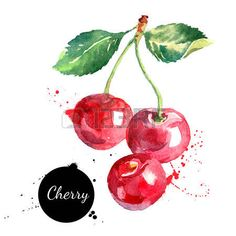 Hand drawn watercolor painting cherry on white background. Vector illustration of berries - stock vector Watercolor Fruit, Fruit Painting, Watercolor Pencils, Fabric Painting, Watercolour Painting, Painting & Drawing, Illustration Blume, Fruit Illustration, Fruits Drawing