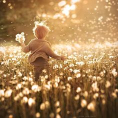 900+ Dandelion Seeds ideas in 2021 | dandelion, make a wish, dandelion wish