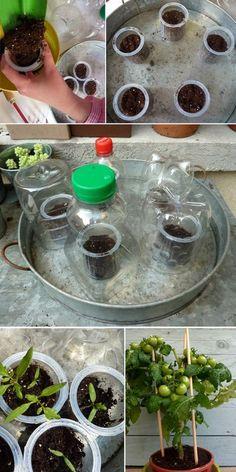 Une activité facile pour les enfants, planter des tomates - Grandir avec Nathan Agriculture, Potager Bio, Plantation, Science For Kids, Earth Day, Kraut, Permaculture, Herb Garden, Botany
