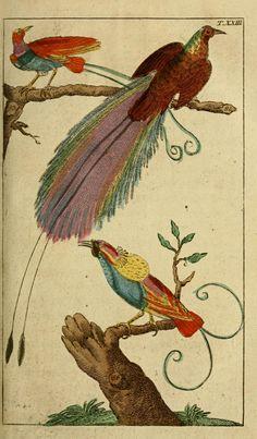 T 2 - Unterhaltungen aus der Naturgeschichte. - (1795) Biodiversity Heritage Library