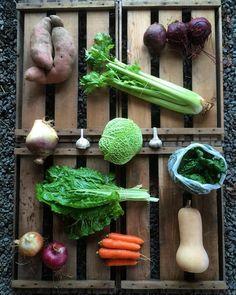 Winter veggies. #dirtyhandscleanhearts