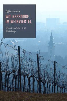 Unterwegs durch die Weinberge Happiness, Explore, Group, World, Movie Posters, Travel, Outdoor, City Limits, Wine Vineyards
