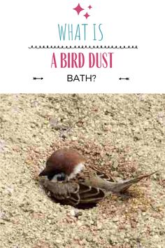 "Visit the blog post to find out why birds take dust baths, sun bathe, and why birds chose to kill and eat ants. Build a DIY bird dust bath with our step-by-step guide, complete with bird safety tips! You can also learn the real reason why birds perch in the sun, and it is not for sun tanning! Lastly, gain fascinating knowledge on how and why birds get rid of ants through a natural process called ""anting."" Sun Tanning, Get Rid Of Ants, What Is A Bird, Bird Perch, Bird Baths, Safety Tips, Wild Birds, Step Guide, Gain"