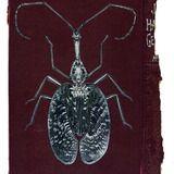 Rose Sanderson - Portfolio - Bugs on Book Covers
