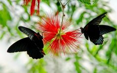 free pictures of butterflys to post on facebook | below black butterfly wallpapers for free use these pictures for ...