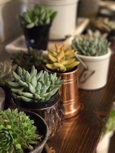 Succulent Planter Ba