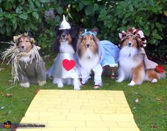 Wizard of Oz Dogs - 2012 Halloween Costume Contest