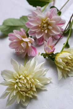 #dalii #daliialbesiroz #daliidegradina #dahlia from #lastsummer #mygarden #dali Dali, My Flower, Flower Arrangements, Succulents, Bouquet, Garden, Plants, Floral Arrangements, Garten