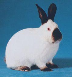 Породы кроликов. Кролики мясных пород. Кролики на шкуру