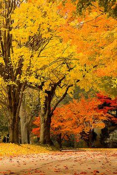 west laurel, philadelphia by m greenbaum photography, via Flickr