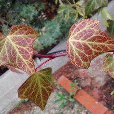 """""""#nature #naturaleza #hojas #plantas"""""""