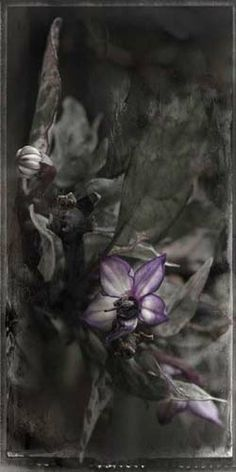 "Flowers In Neutral Moment-2 ""Capsicum-Black Pearl"" Archival pigment print Photo by Soichi Oshika"