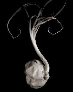 Photos by Tim: Edward Weston - Still life Research Minimalist Photography, Modern Photography, Still Life Photography, Color Photography, Black And White Photography, Nature Photography, Straight Photography, Photography School, Photography Ideas