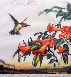 Walton Ford Humming Bird