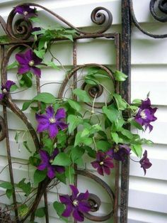 Use an antique gate for a trellis.