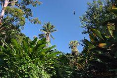 Jardim Botânico do Rio de Janeiro - Região amazônica