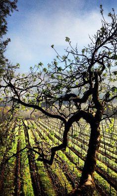 Mendocino County Vineyards arrangeyourvacation.com