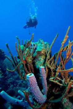 bonaire diving - Bing Images