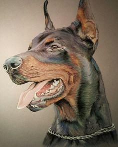 Beautiful Dobie drawing - Love me a Dobie! Doberman Colors, Doberman Love, Animal Paintings, Animal Drawings, Dobermann Tattoo, Canis Lupus, Doberman Pinscher Dog, Dog Portraits, Dog Art
