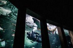 ¿Alguna vez has visto alimentar a los tiburones? Te animamos a venir al Aquarium Finisterrae de A Coruña y disfrutar de esta impresionante experiencia.  🐠  Más info y foto vía Museos Científicos Coruñeses ➡ ➡ www.mc2coruna.org/gl/actividades.html  #TurismoFamiliar #VisitaCoruña Html, Sharks, Awesome, Impressionism, Museums, Tourism, Activities