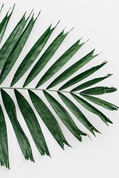 65 New Ideas For Garden Tropical Green Leaves