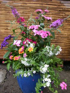 container garden with #angelonia flowers  Buddleia, Heliotrope, Lantana, Dianthus, Trailing Angelonia, Verbena