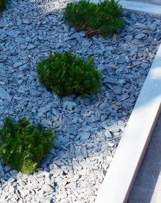 Kääpiövuorimänty Stepping Stones, Yard, Gardening, Outdoor Decor, Ideas, Home Decor, Stair Risers, Patio, Decoration Home