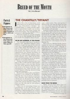 Chantilly - in 1995 Cat Fancy Issue Contributer: Sarah Hartwell Chantilly Tiffany, Fancy Cats, Chocolate Box, Cat Breeds, Cats And Kittens, Life, Cat, Cats