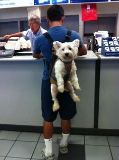 haha better than a purse dog i suppose..