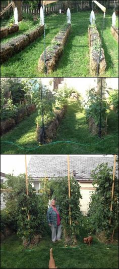 How to Grow a Straw Bale Garden diyprojects.ideas Cant grow plants and vegetables because critters keep eating them? This simple gardening idea mi Hay Bale Gardening, Strawbale Gardening, Container Gardening, Growing Vegetables, Growing Plants, Gardening Vegetables, Pot Jardin, Straw Bales, Organic Gardening Tips