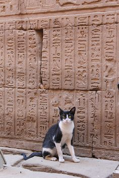 A curious kitty cat posing in front of one of the oldest, most intriguing and beautiful forms of written communication. You can feel the history seeping from the hieroglyphics - at Edfu Temple, Egypt.