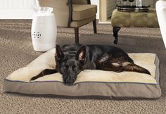 Your dog will love relaxing on this plush Rectangular Pillow Pet Bed. http://www.menards.com/main/grocery-pet/cat-supplies/pet-beds/masterpaws-rectangular-pillow-pet-bed/p-2268718.htm?utm_source=pinterest&utm_medium=social&utm_campaign=pinsforpets&utm_content=pet-bed&cm_mmc=pinterest-_-social-_-pinsforpets-_-pet-bed