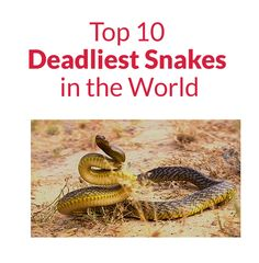 Top 10 Deadliest Snakes in the World