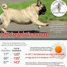 Would you walk on the asphalt barefoot?    PLEASE BE CAREFUL AND AWARE WHILE WALKING YOUR ANIMAL