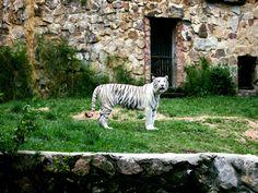 Black & White.  Cali Zoo, Colombia.