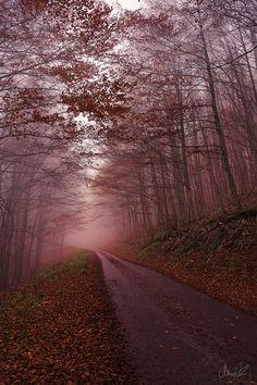 Red Evening by Robert Marić on 500px.com
